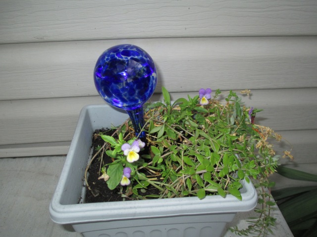 five o'clocks,johnny jump ups,violets,self watering,moss,container garden,
