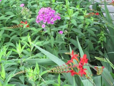 flowerbed with phlox